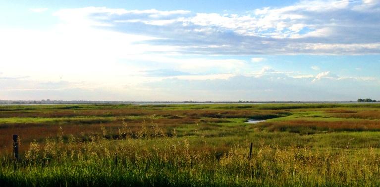 A marshy field in Colorado