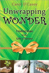 Unwrapping-Wonder