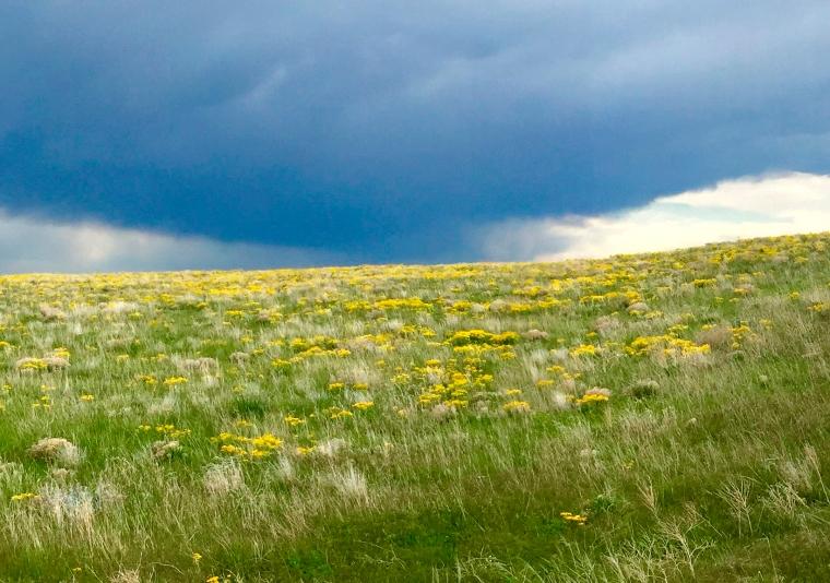 Photo of the Pawnee National Grasslands