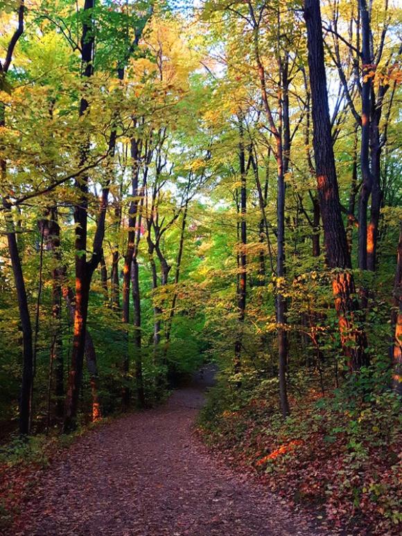 An October walk through New England woods